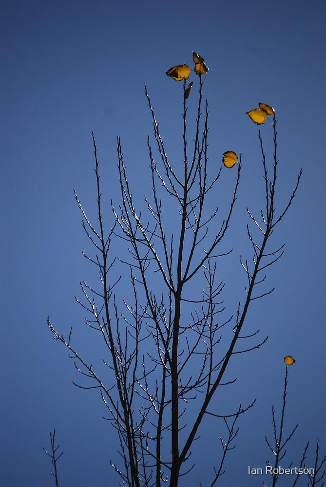 last leaves by Ian Robertson