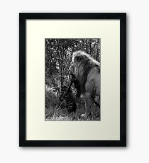 Lion Kill Framed Print