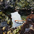 Treasure Cove Tide Pools 02 by IreKire