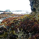 Treasure Cove Tide Pools 04 by IreKire