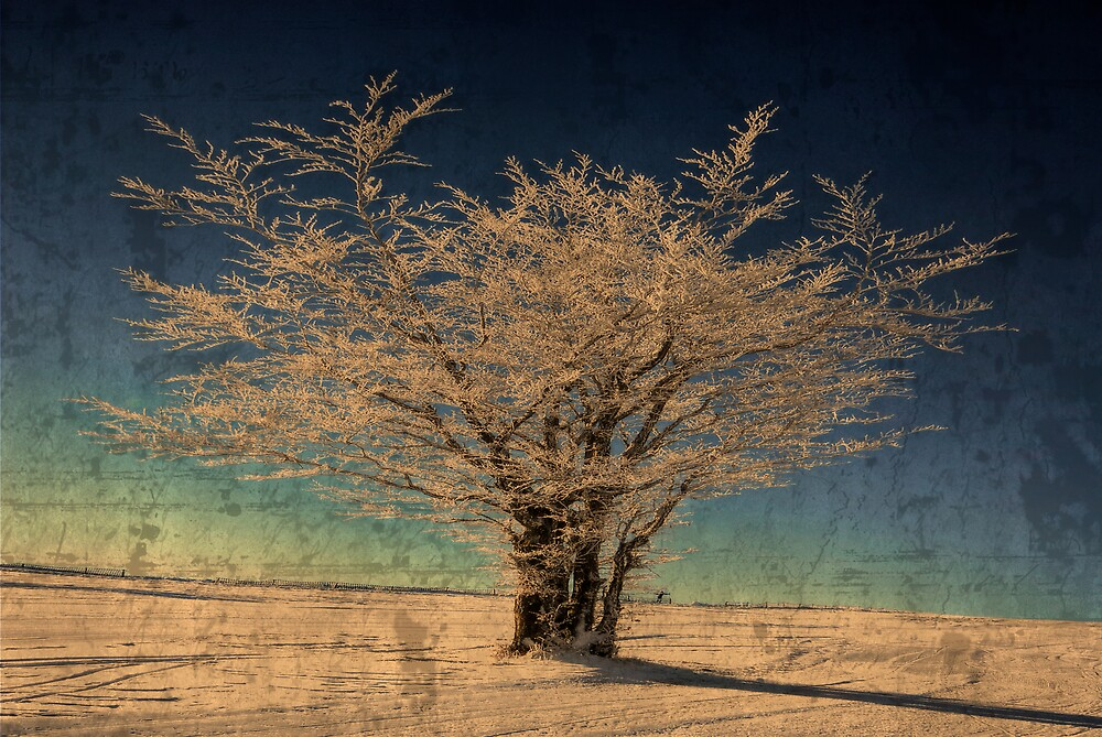 The white tree by Philippe Sainte-Laudy