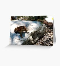 Eastern American Toad with Common Daisy Greeting Card