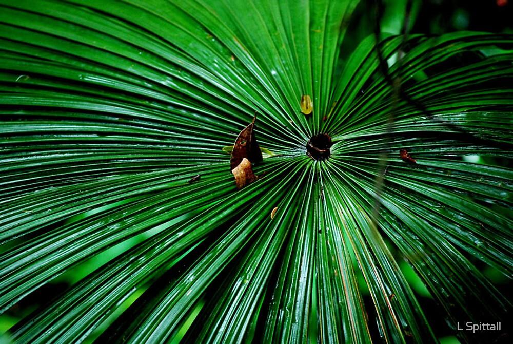 Fan Palm by L Spittall