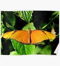 Flame Butterfly Poster