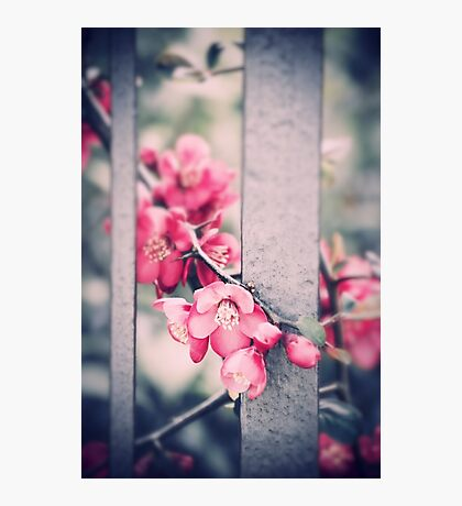 A delicate Spring Photographic Print