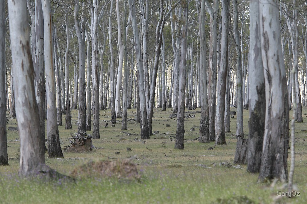 Eucalypt forest in Spring by GaryOz