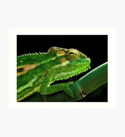 Cape Dwarf Chameleon Art Print