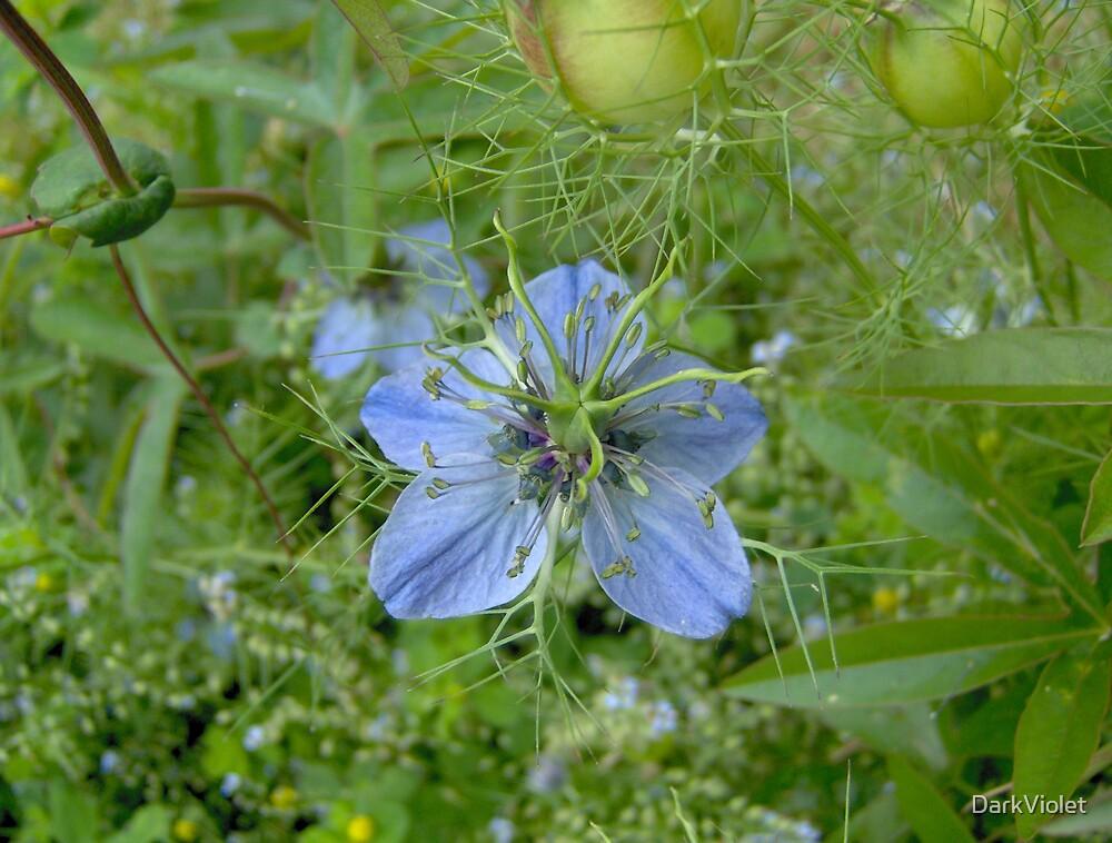 blue flowers by DarkViolet