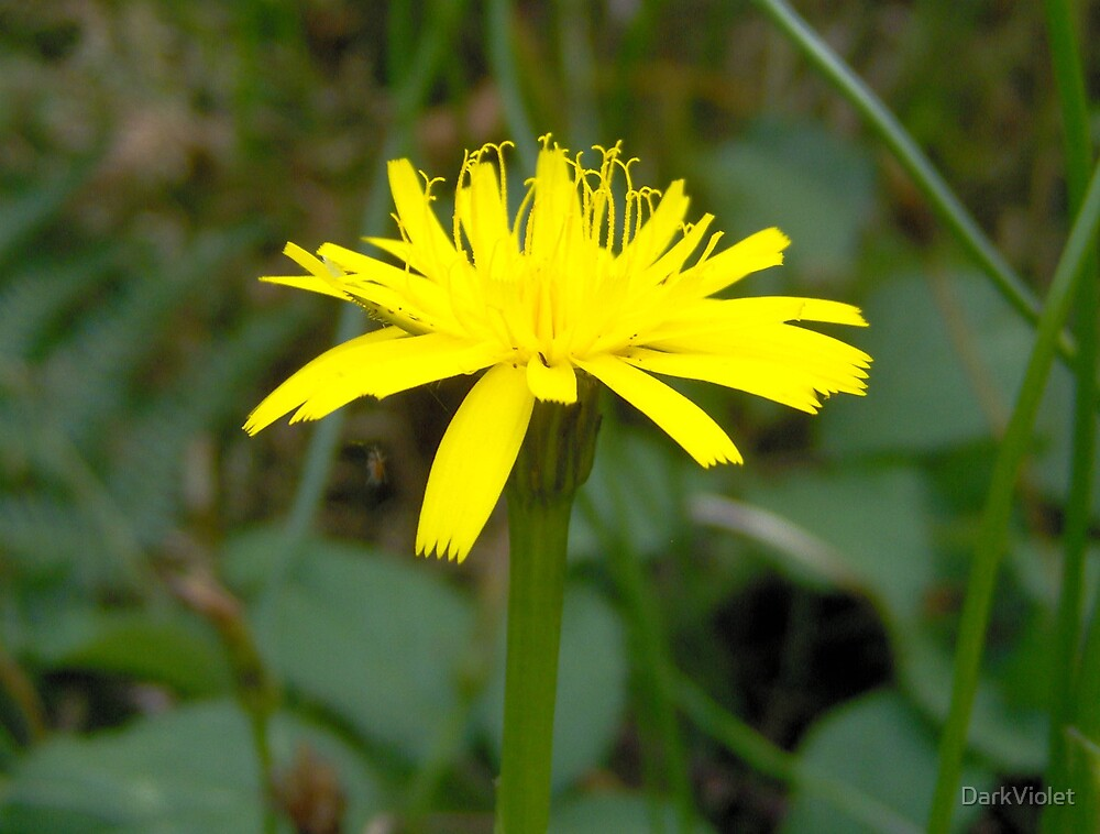 Sunny yellow flower by DarkViolet