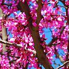Sakura Ağacı - Efes by M-EK