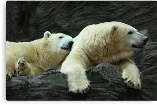 Polar Bears: Snuggle by Daniela Pintimalli