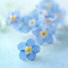 Forgetmenot blues by Jill Ferry