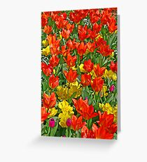 spring fantasy: tulip symphony Greeting Card