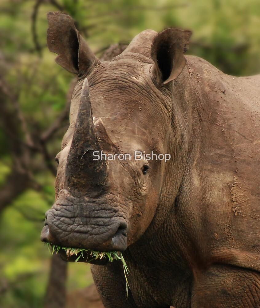 Prehistoric beauty by Sharon Bishop