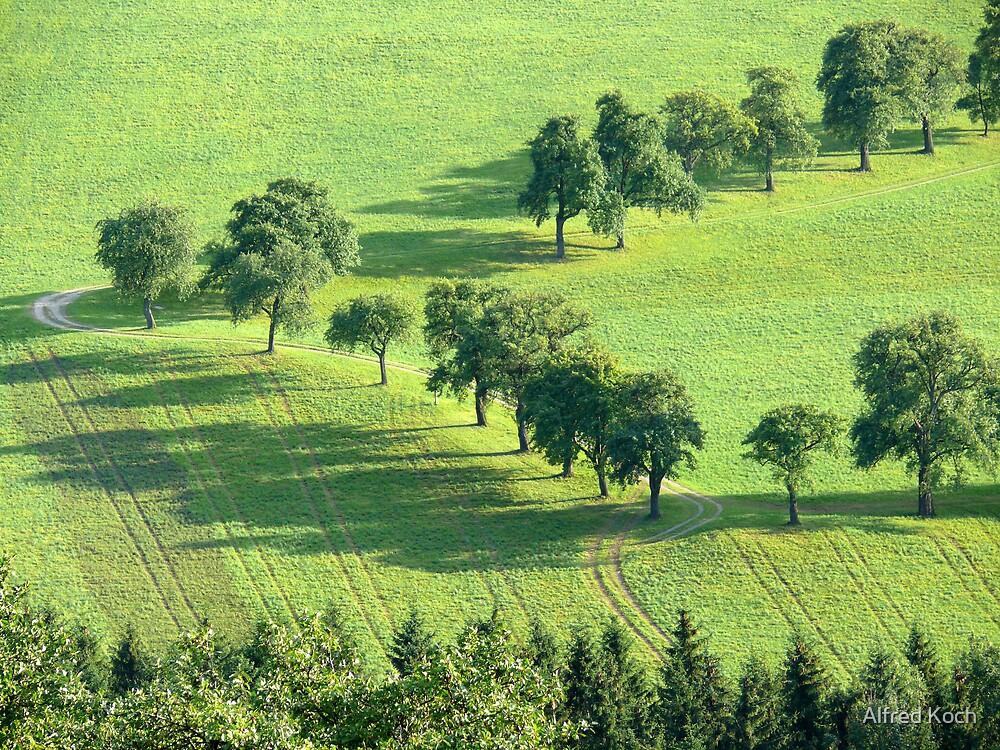 green by Alfred Koch