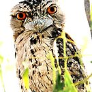 Tawny Frog Mouth by cs-cookie