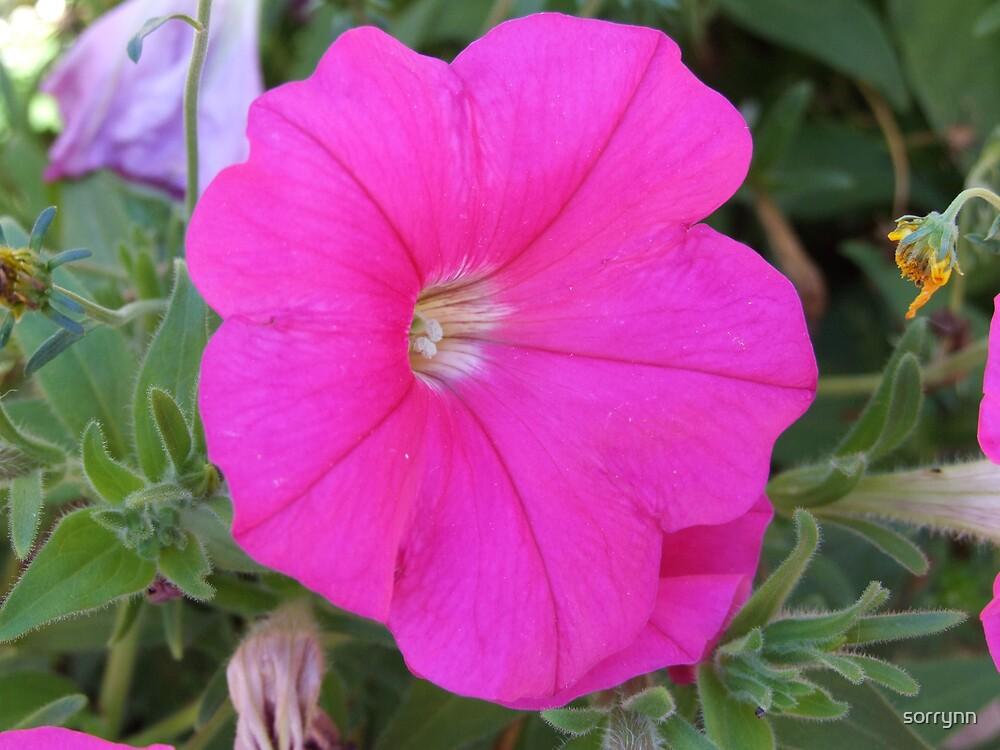 Purple Flower by sorrynn