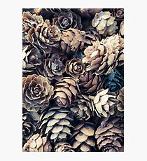 Tiny Pinecones Photographic Print