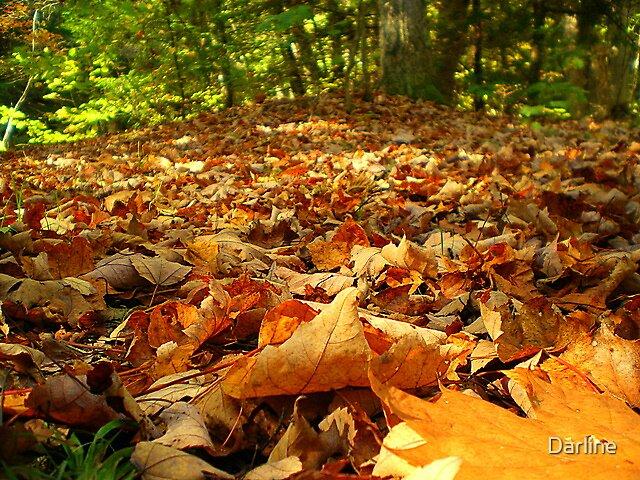 Autumn's Allure by Darline