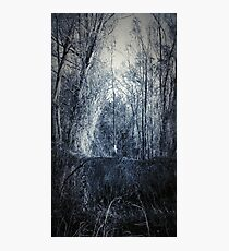 Nature's Ghillie Photographic Print