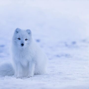 Snow Lone Wolf design  by lordoftime39