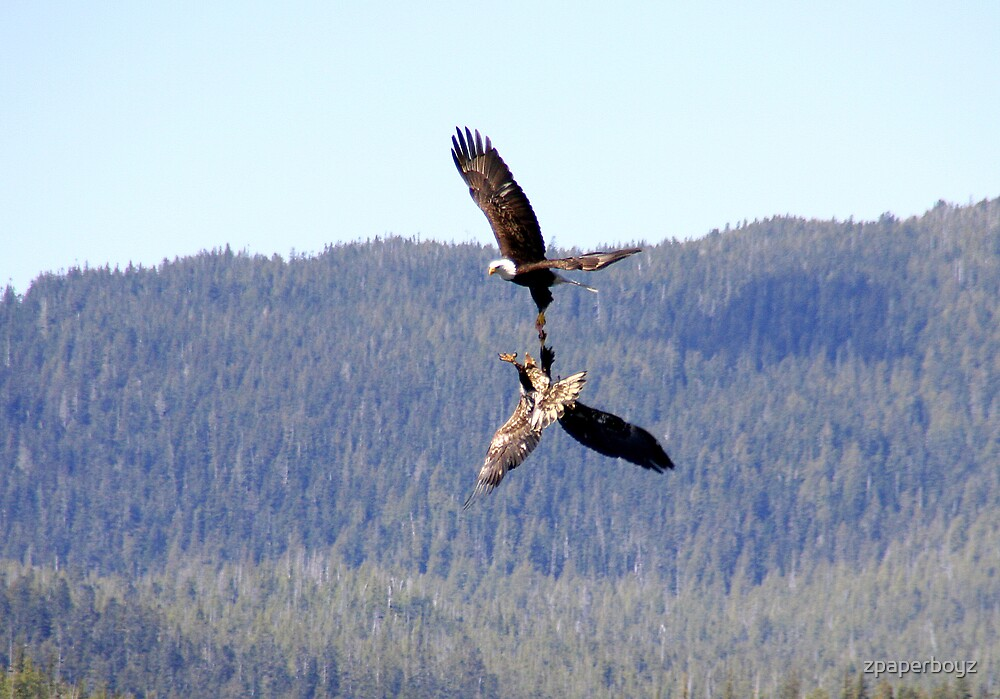 Eagles Fighting by zpaperboyz