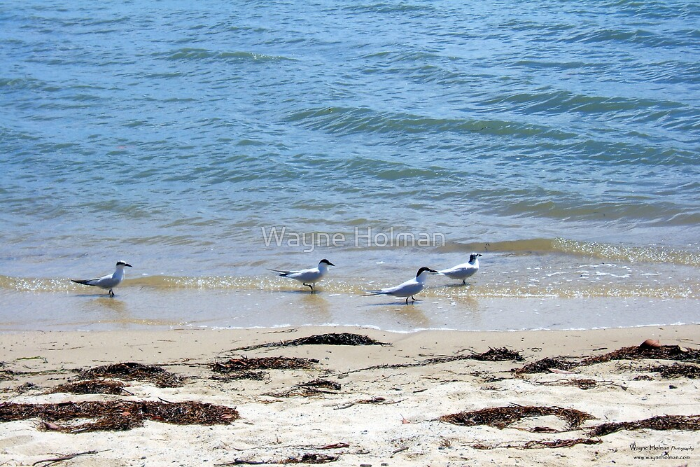 Beach Combing by Wayne Holman