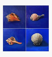 Shell Collection Photographic Print