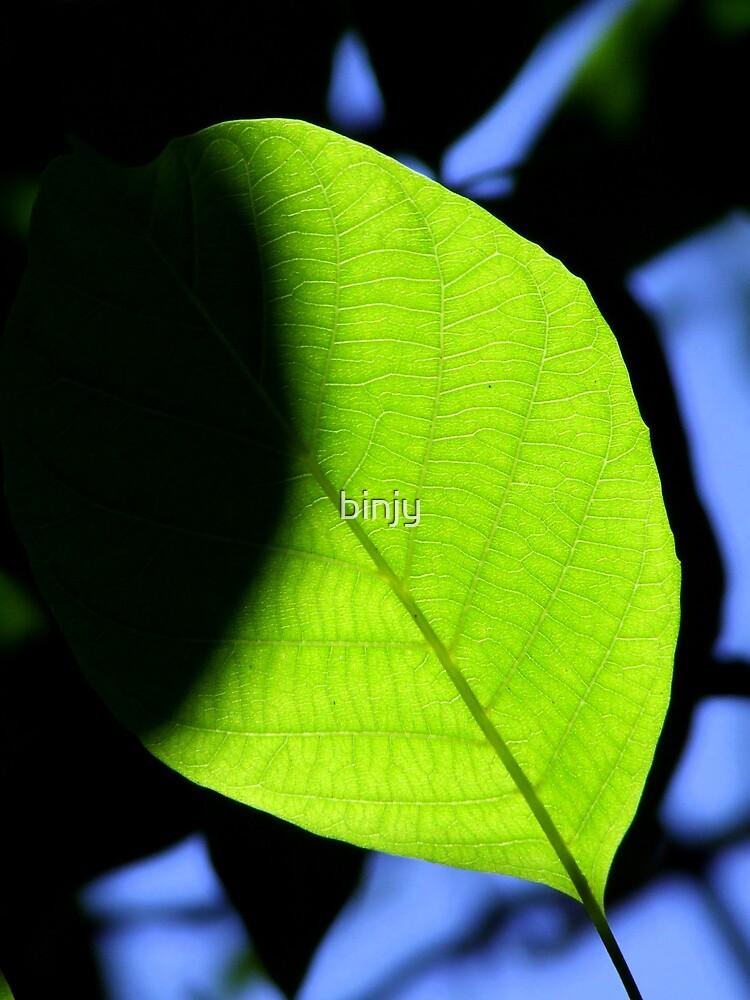 Walnut Eclipse by binjy