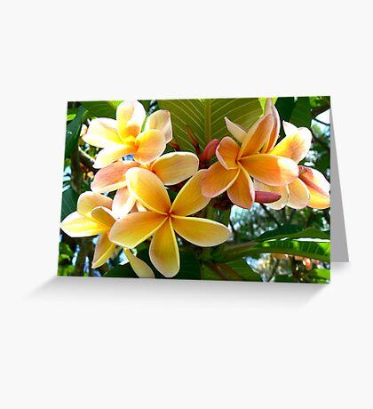 Frangipani # 2 Greeting Card