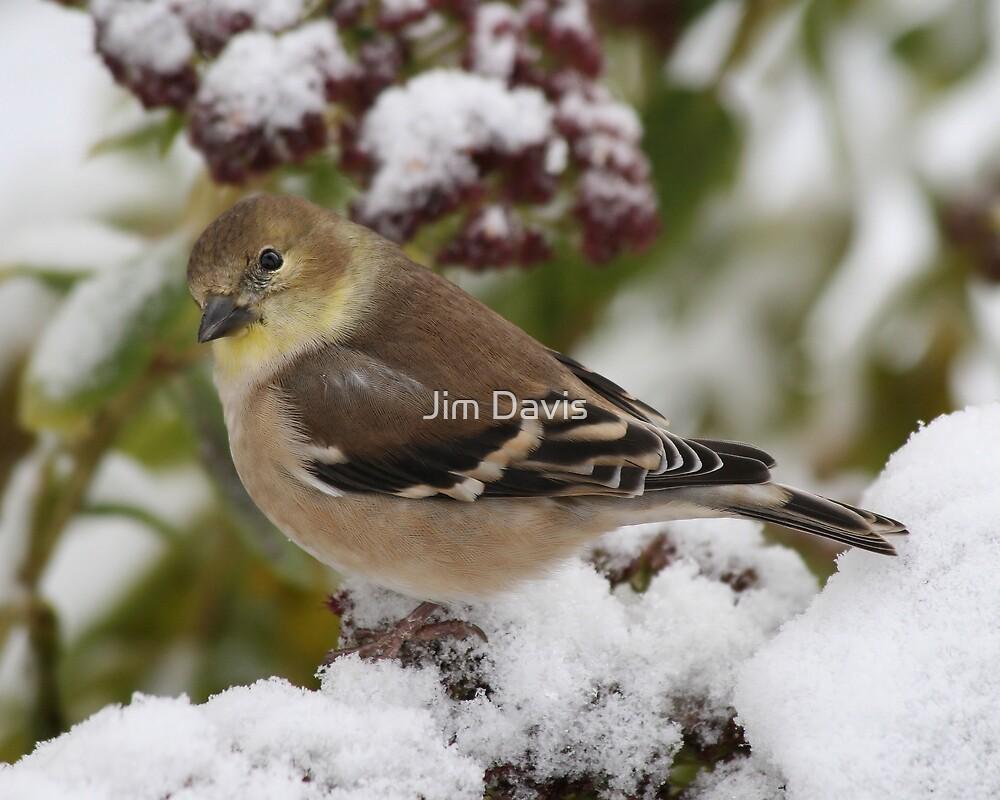 """The Beginning Of Winter"" by Jim Davis"