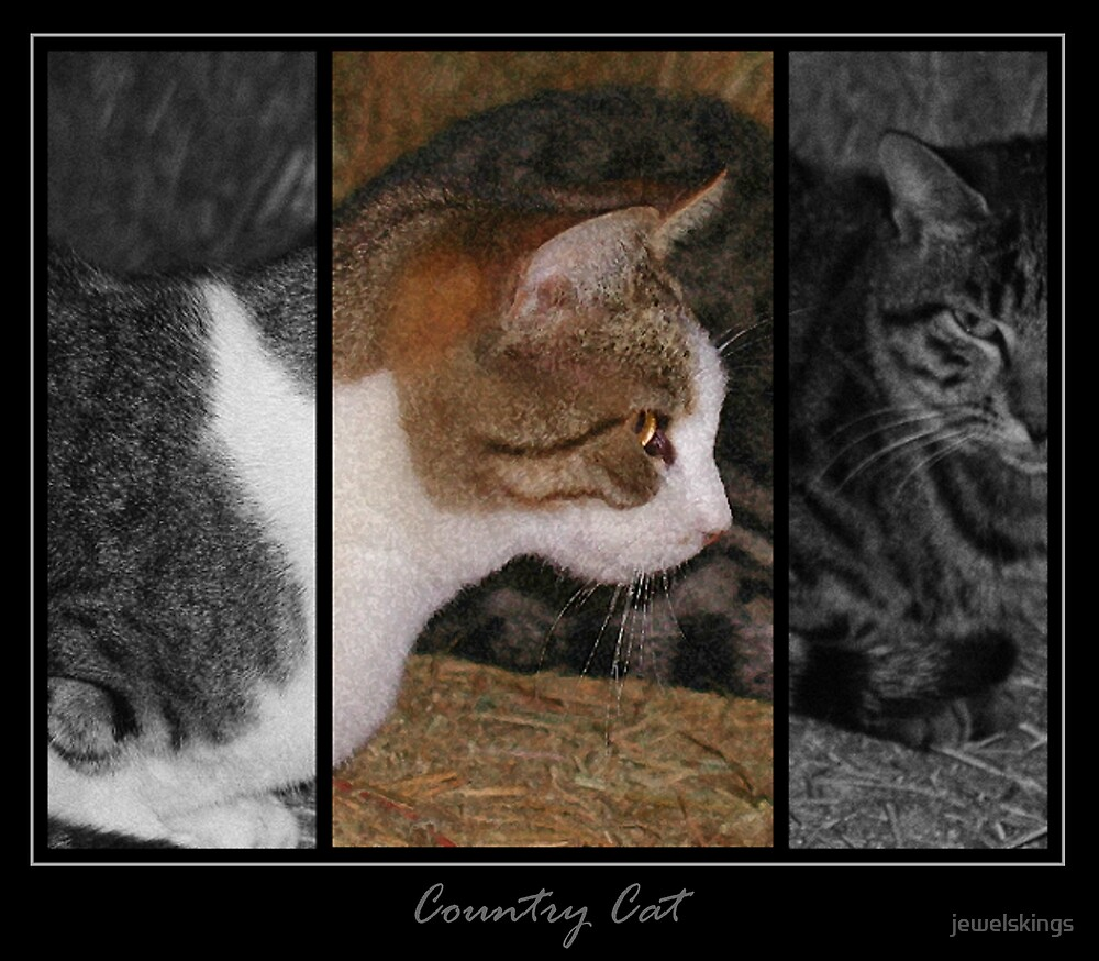 Country Cat by jewelskings