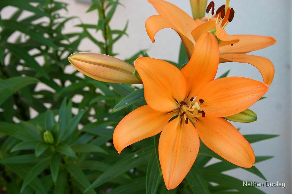 Orange by Nathan Dooley