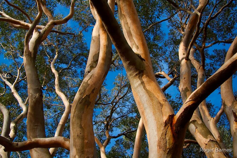 Gum Tree Uprising by Roger Barnes