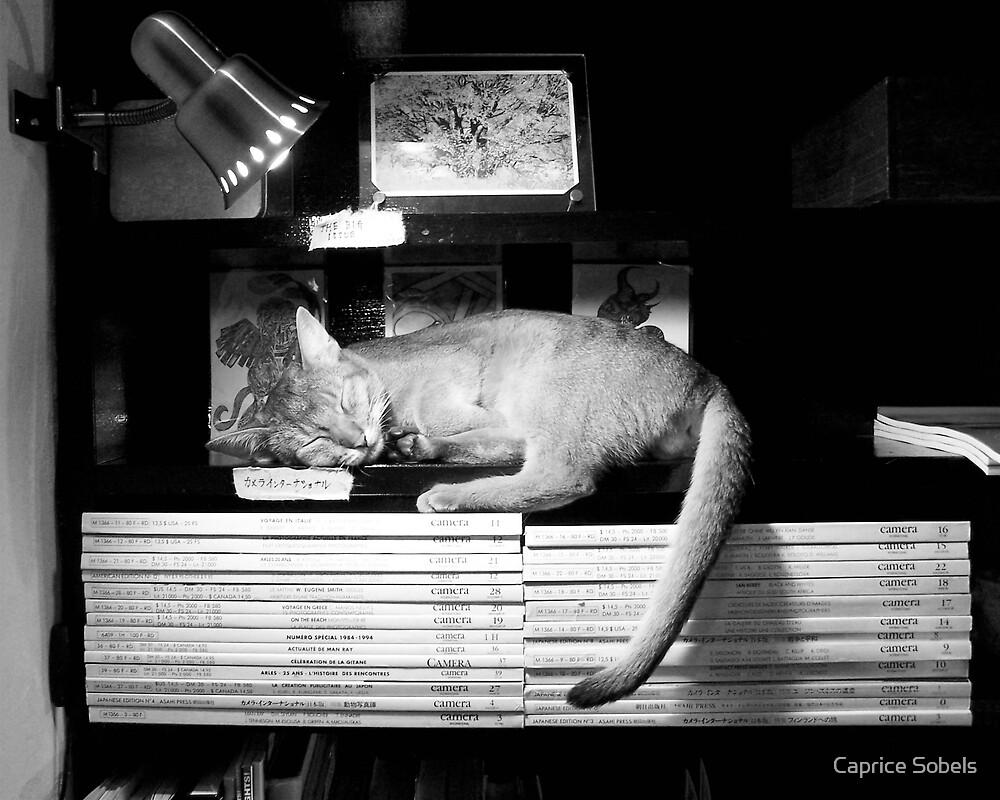 Catnap in Tokyo by Caprice Sobels
