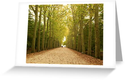 Autumn Pathway by Joanna Jeffrees