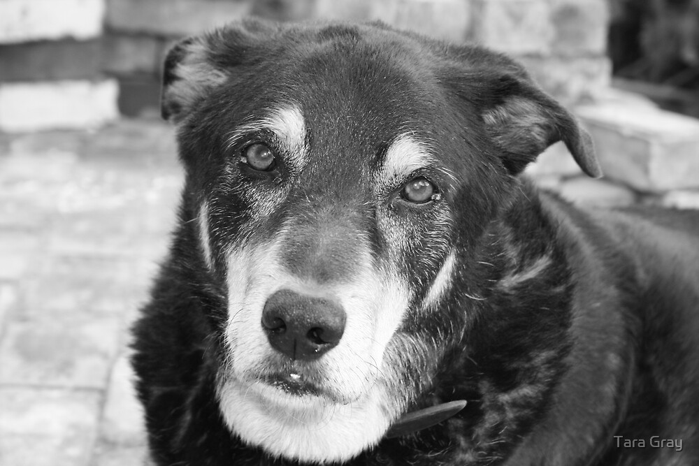 Max the Dog by Tara Gray
