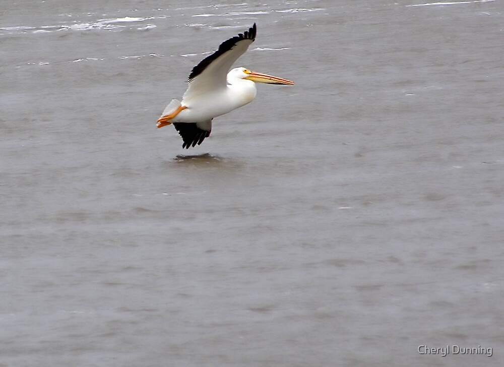 flying solo! by Cheryl Dunning