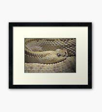 Yellow snake Framed Print