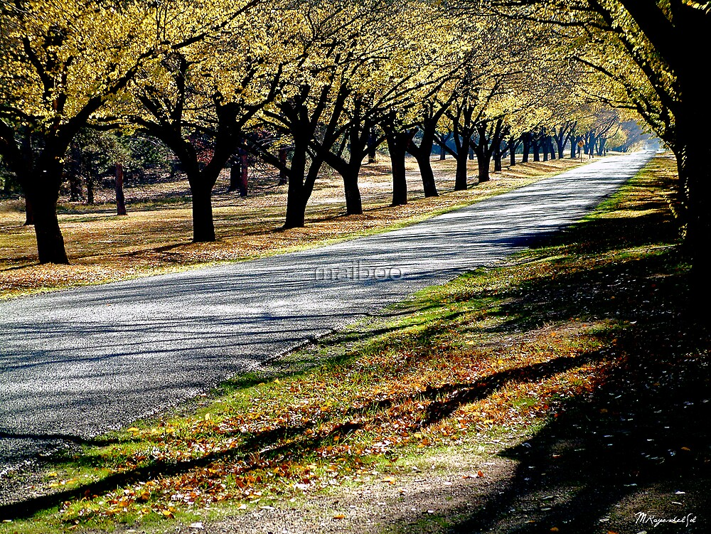 Autumn driveway by maiboo