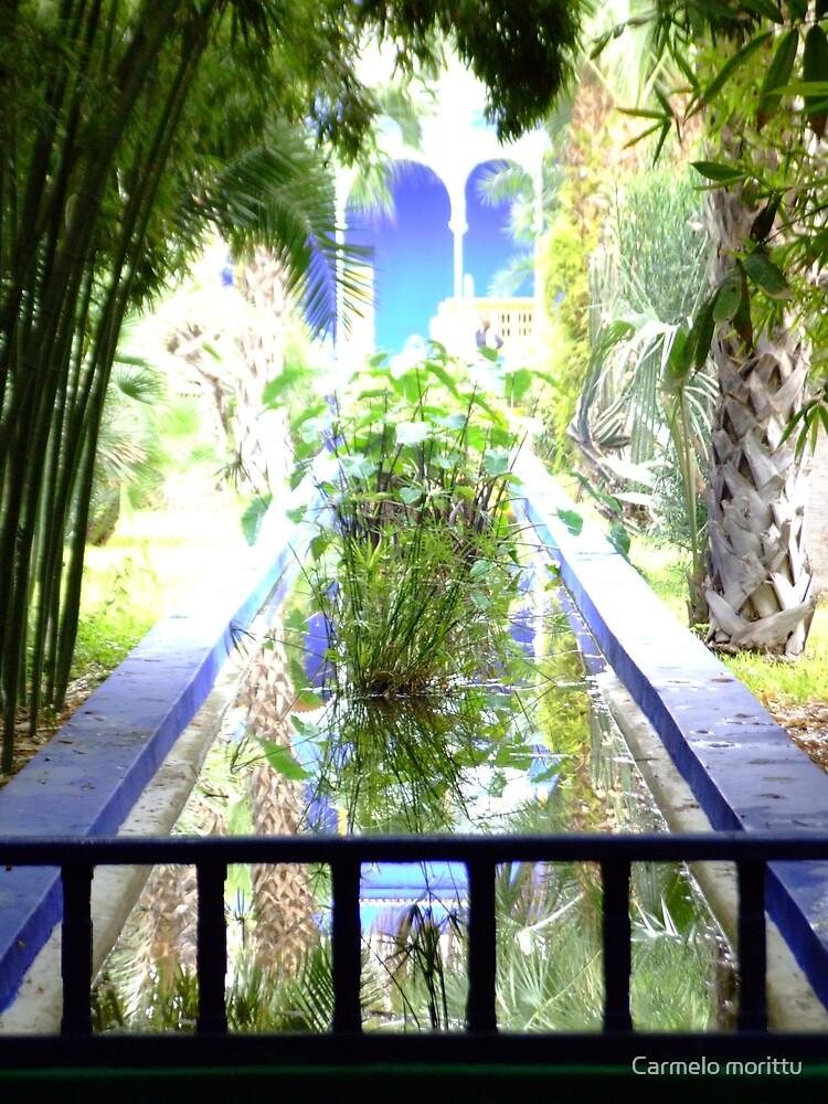 Tropical Garden by Carmelo morittu