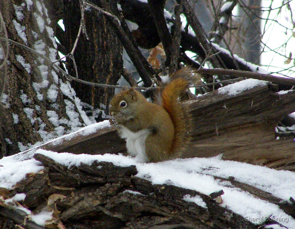 munching in the snow by Cheryl Dunning