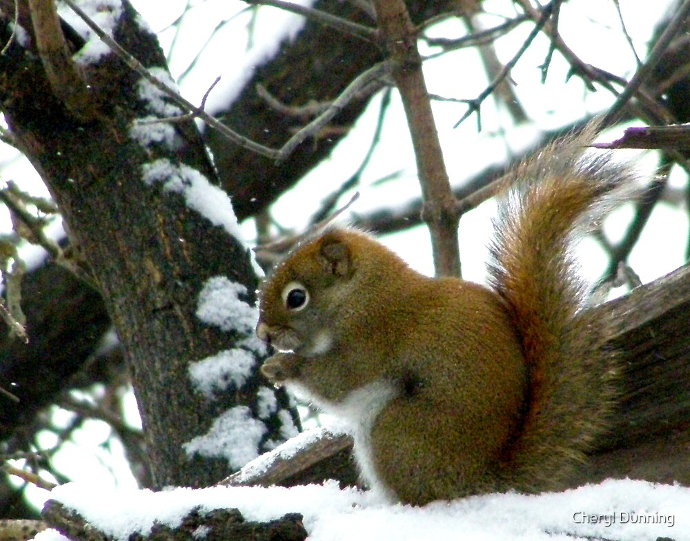 munching in the snow 2 by Cheryl Dunning