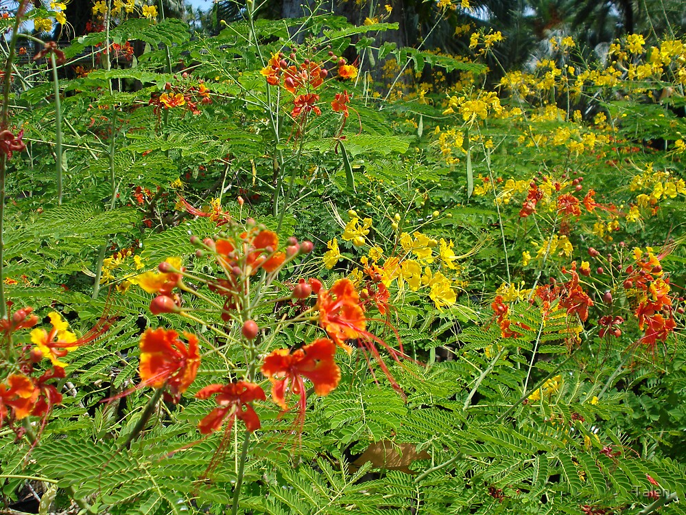 Flowers in Red and Orange by Talen