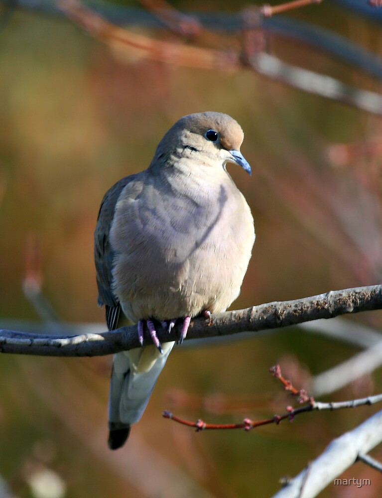 dove2 by martym