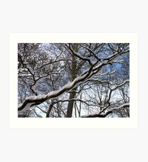 Wrapped in Winter's Cold Embrace Art Print