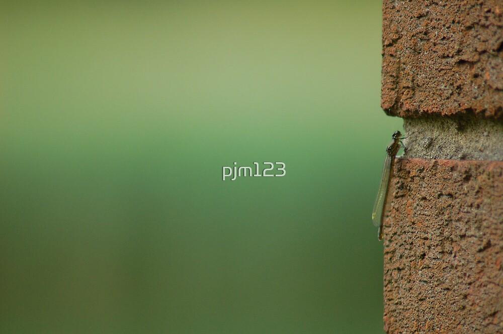 Bricks & Mortar by pjm123