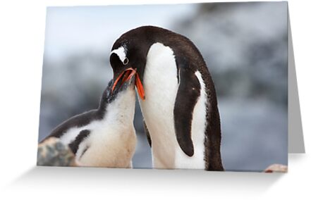 "Gentoo Penguin and Chick ~ ""Meals Home Delivered"" by Robert Elliott"