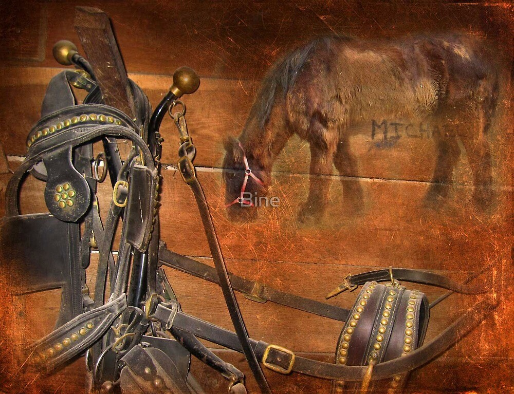 Hommage to Michael, the retired wagon horse  by Bine