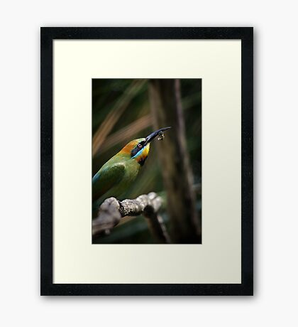 Rainbow Bee Eater Framed Print
